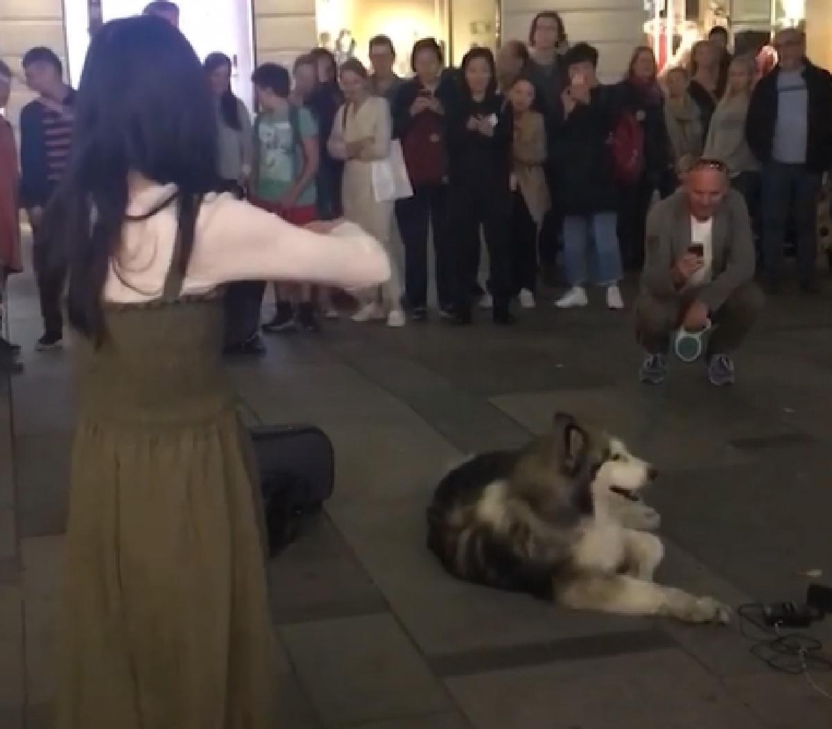 cucciolo husky proprietario permesso partecipazione