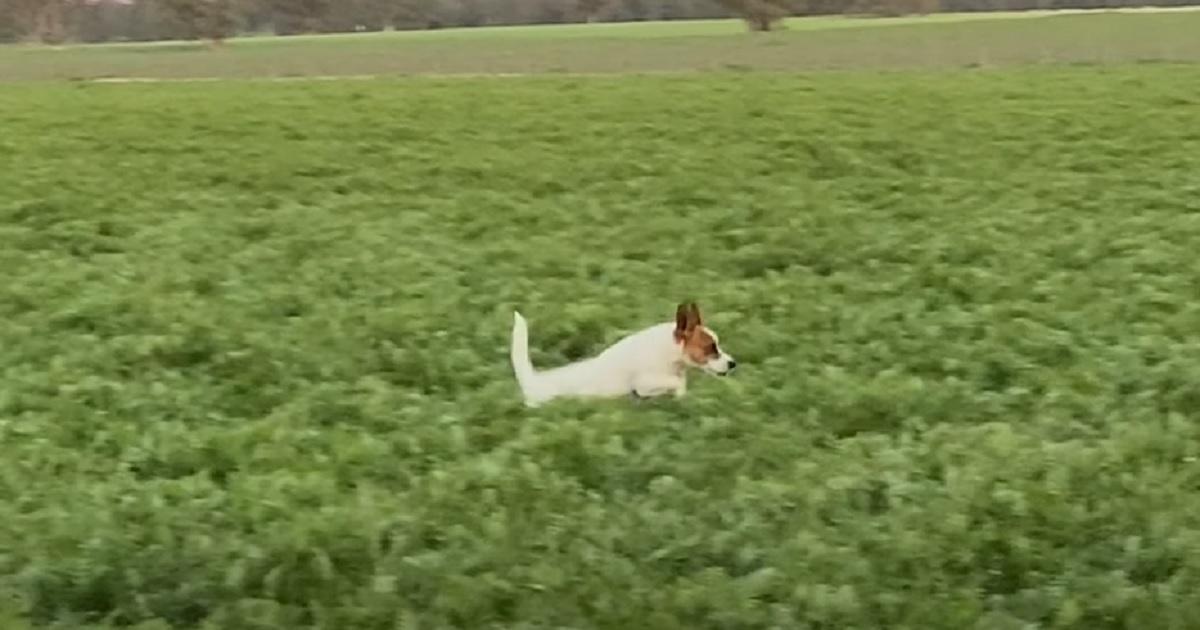 salto cucciolo campo