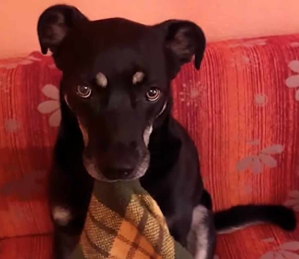 leo cucciolo di cane riporta coperta