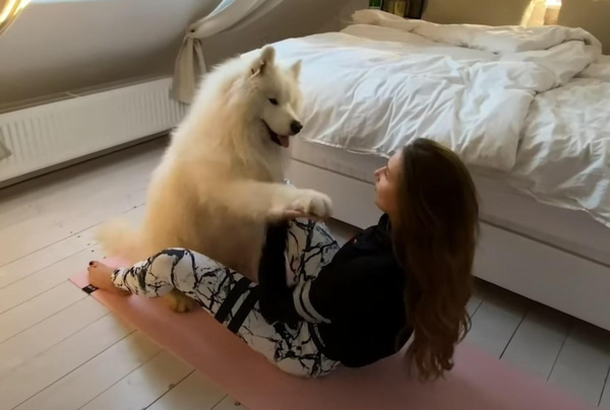 Il cucciolo Samoiedo Felix è un amante dello sport, non è difficile capire il perché nel video