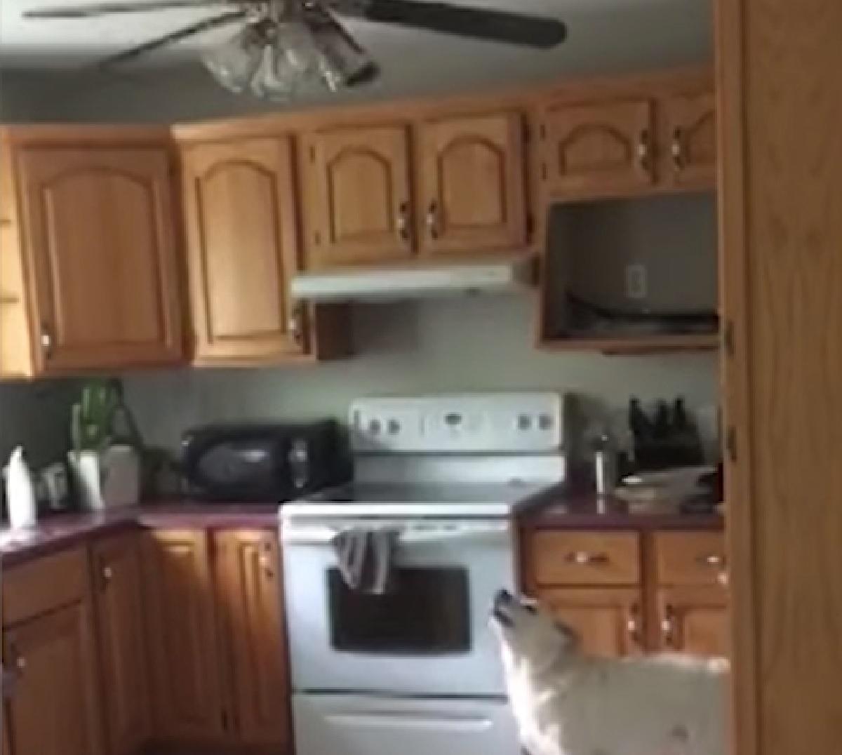 Il cucciolo Spectre odia il ventilatore a soffitto, il suo rapporto con l'oggetto nel video