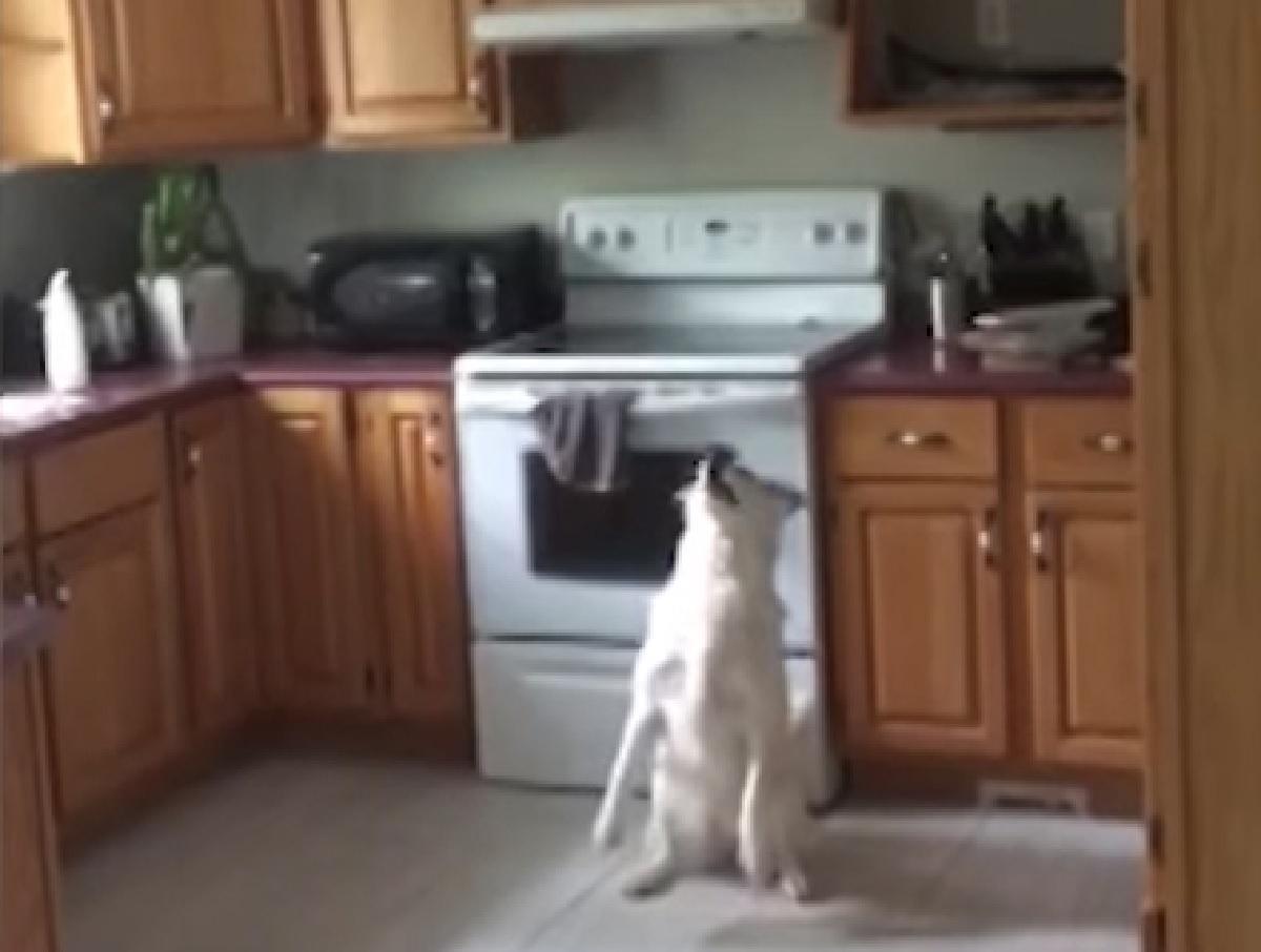 spectre cucciolo ottiene ciò che vuole