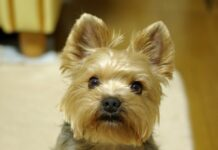 cucciolo cane programma tv