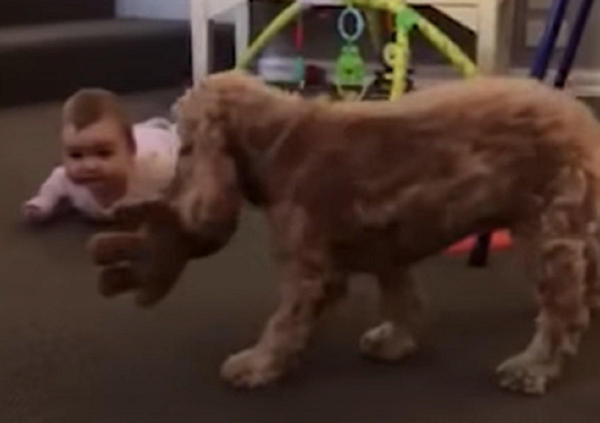 orsacchiotto cucciola porta