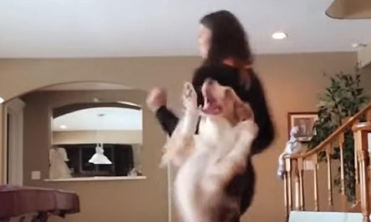 lava cucciola danza