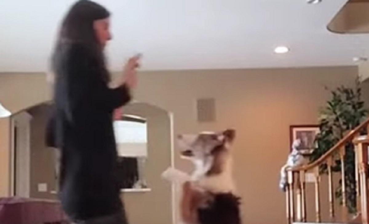 cucciola ballare ragazza