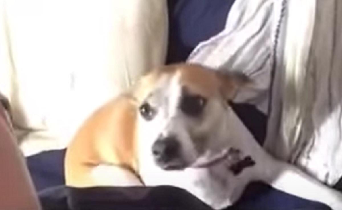 """La cucciola di cane """"influencer"""" si fa una foto con il papà, la posa che assume in video è fantastica"""