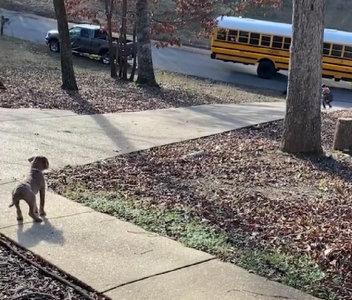 penny cucciola labradoodle corre vialetto