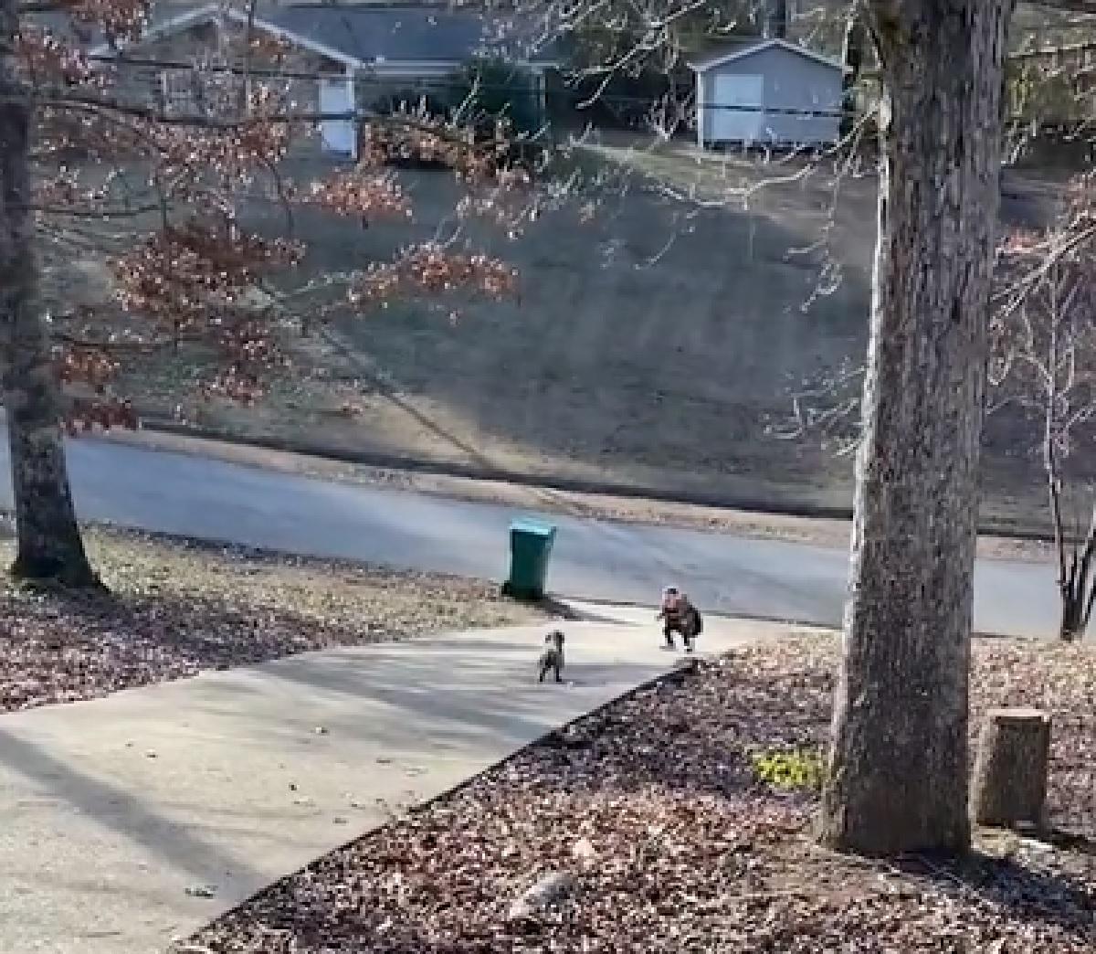 penny cucciola corre dal fratellino