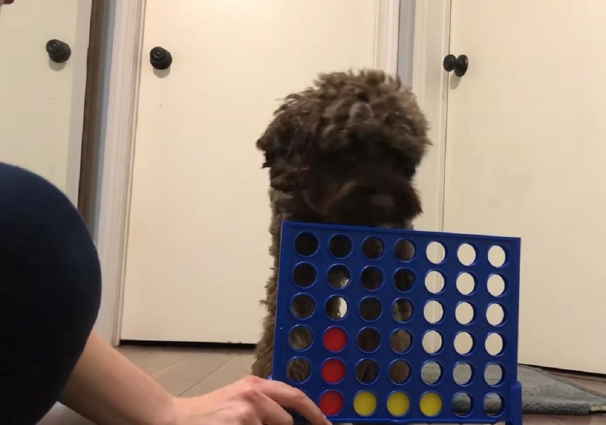 La cucciola Spoodle impara a giocare a Forza 4, nel video la sua indubbia bravura