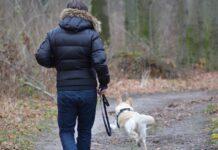 localizzare cane che scappa