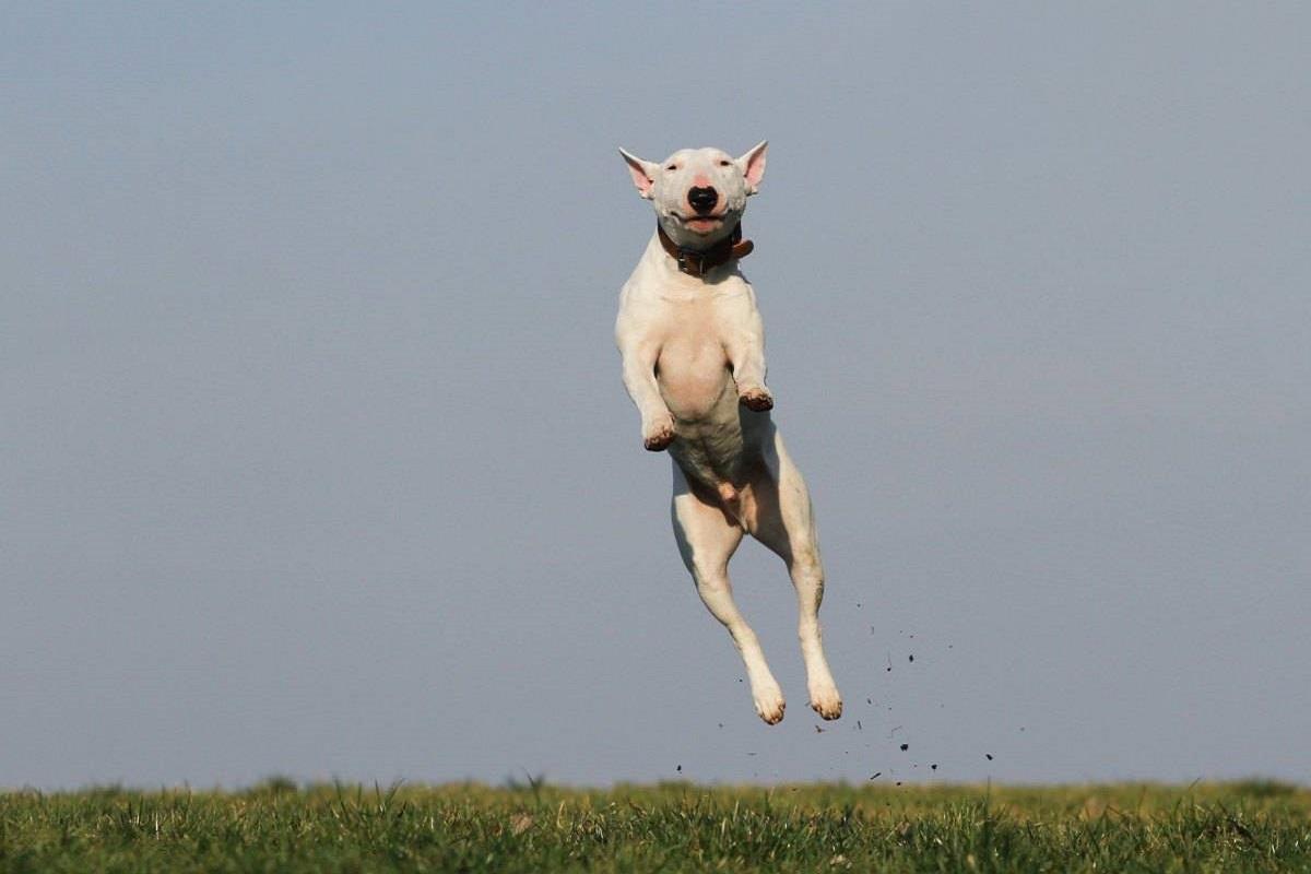 cane che salta in alto