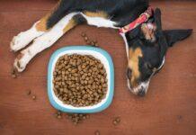 cane dorme accanto ad una ciotola di croccantini