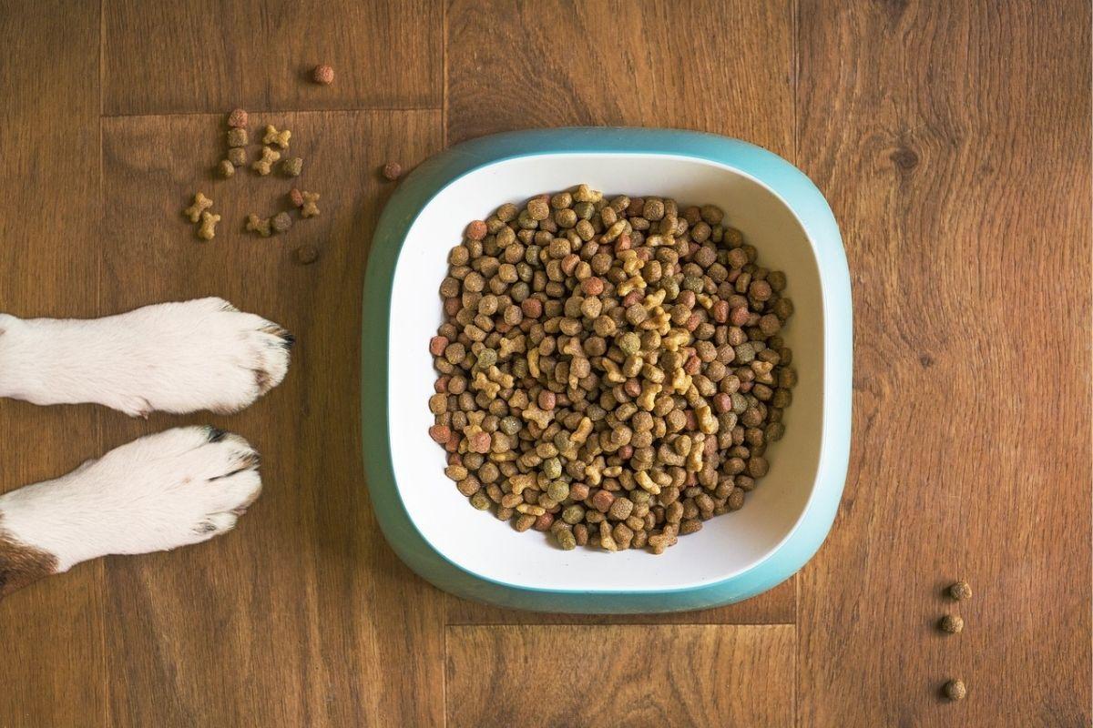 Perdita di appetito nel cane: cosa fare se Fido non mangia