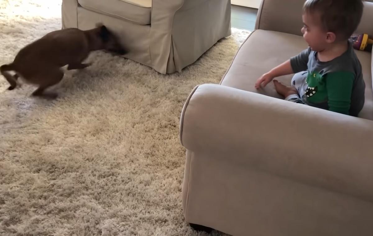 Questo cucciolo di cane fa divertire il fratellino di 18 mesi, il video è una gioia per gli occhi