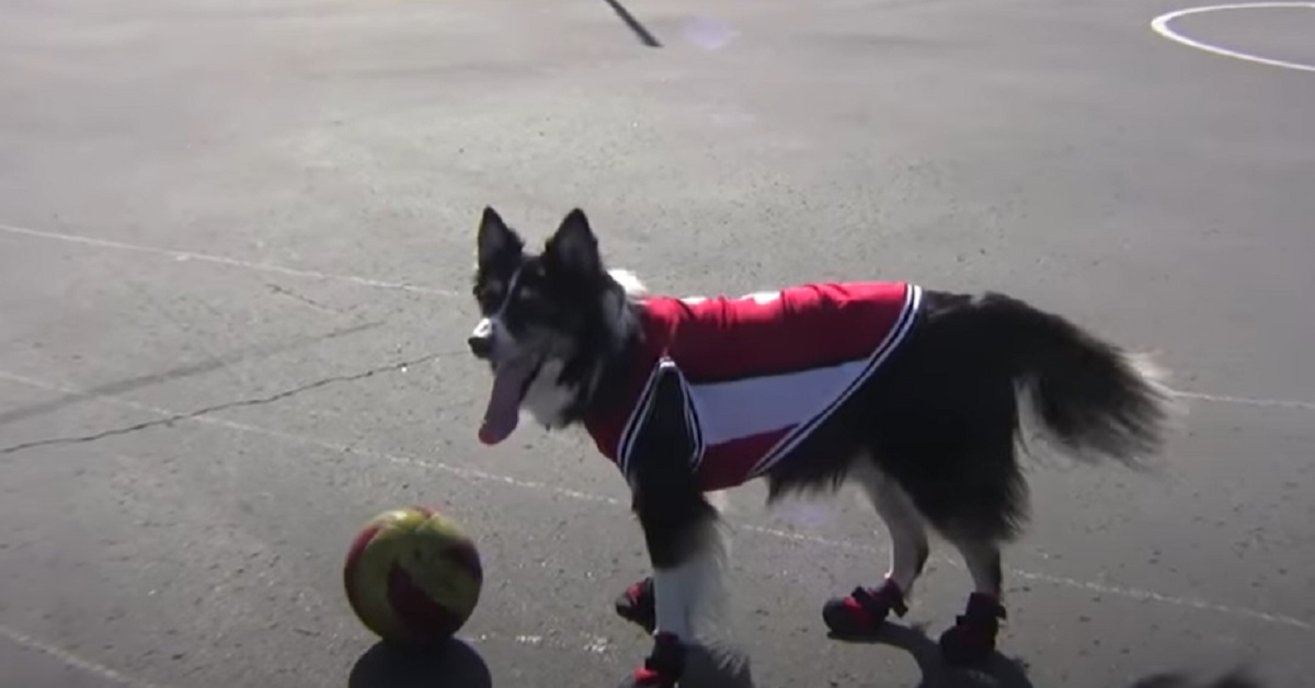 petey cucciolo palla