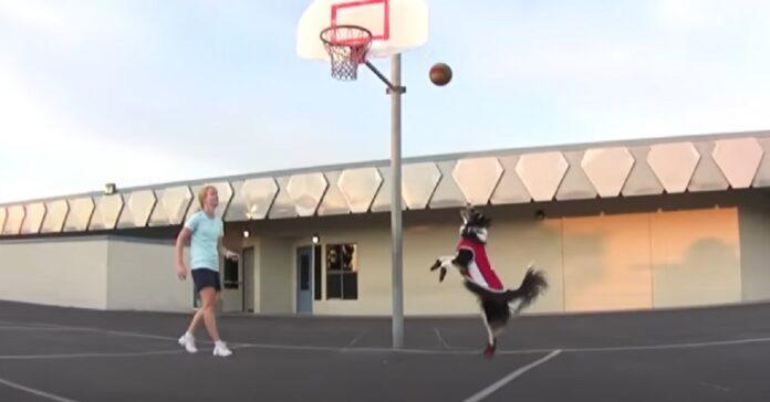 cucciolo basket campione