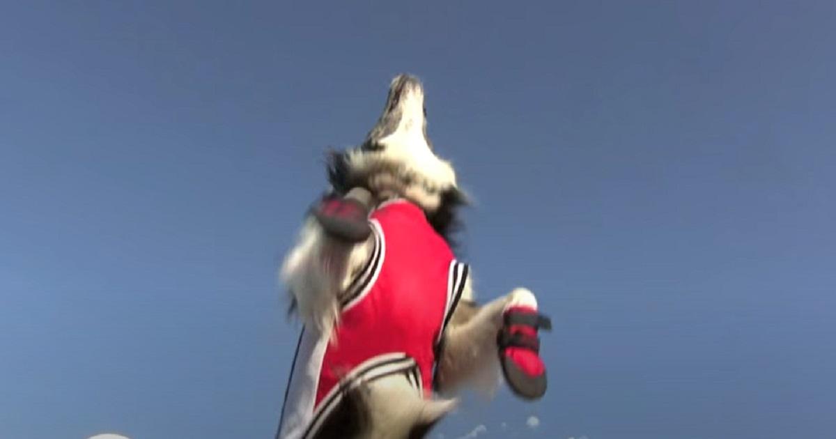 salto cucciolo bravo