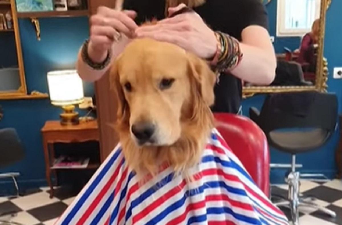 cliente parrucchiere cane
