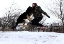 cane e padrone saltano corda