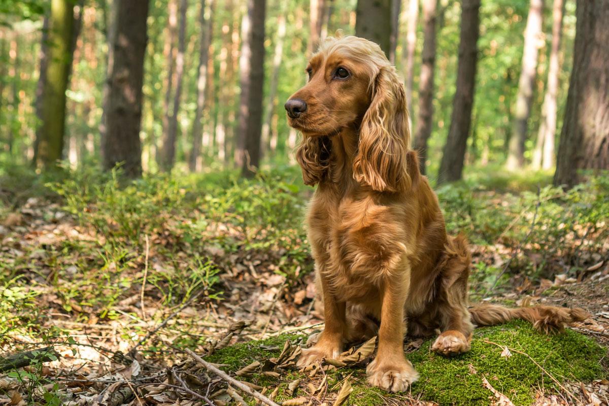cane nella foresta
