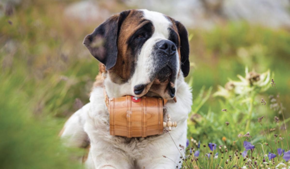 10 razze di cani che vanno d'accordo con l'Akita