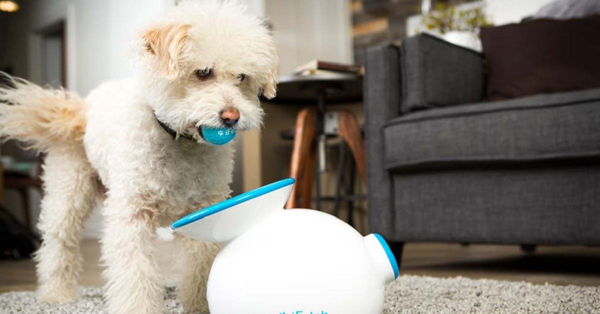cane gioca con la pallina