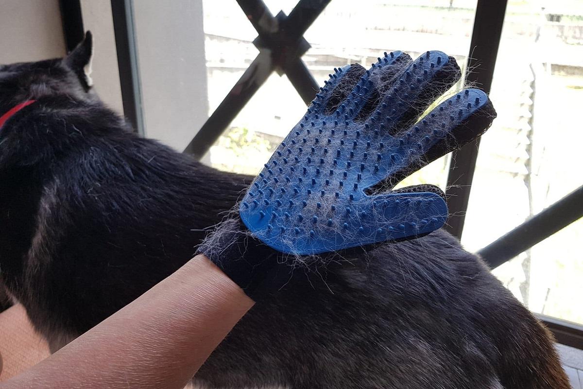 guanti per toelettatura cane