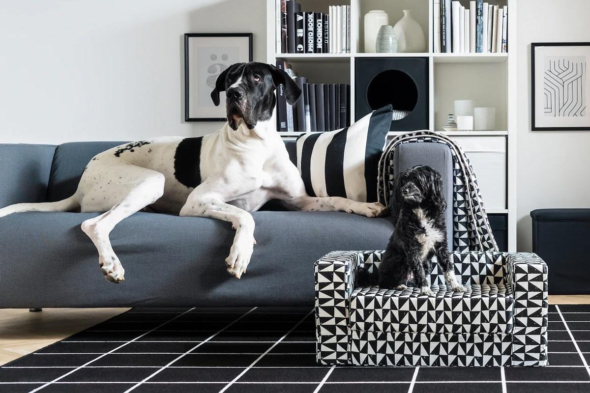 cani su divano