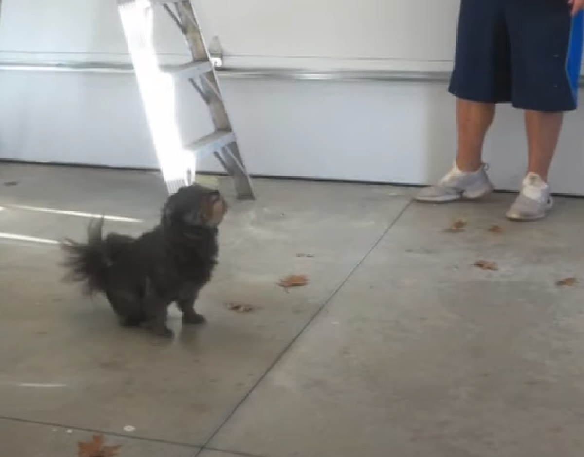 bonez cucciolo pomapoo proprietario test reazione