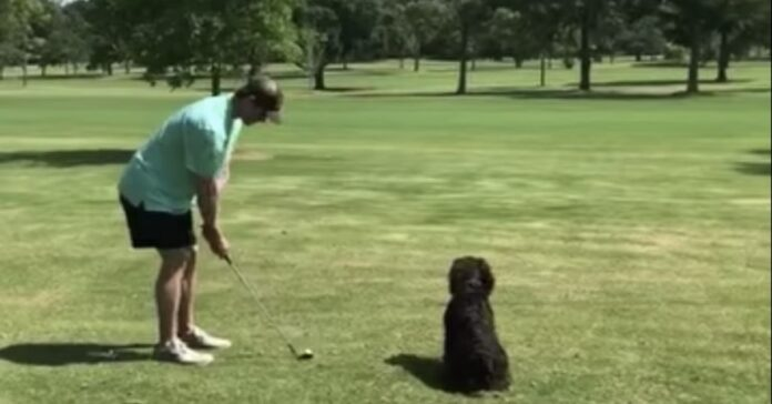 uomo gioca a golf con il suo cane nero