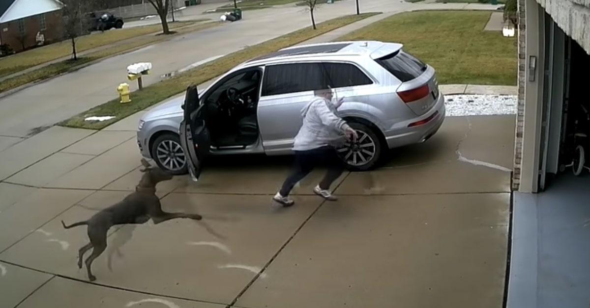 Un uomo esce a buttare la spazzatura ma il cucciolo di cane del vicino gli fa una brutta sorpresa (VIDEO)