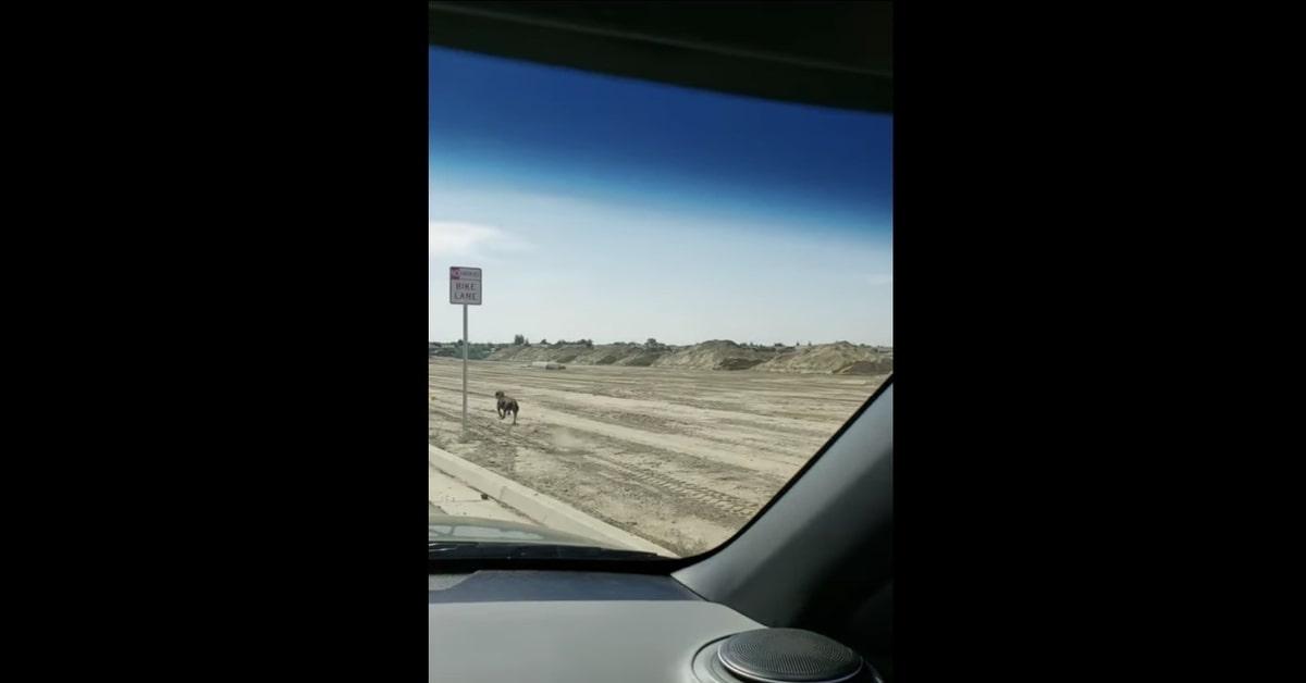 Xena, la cucciola di Dobermann che sorprende tutti con la sua velocità quando corre (VIDEO)