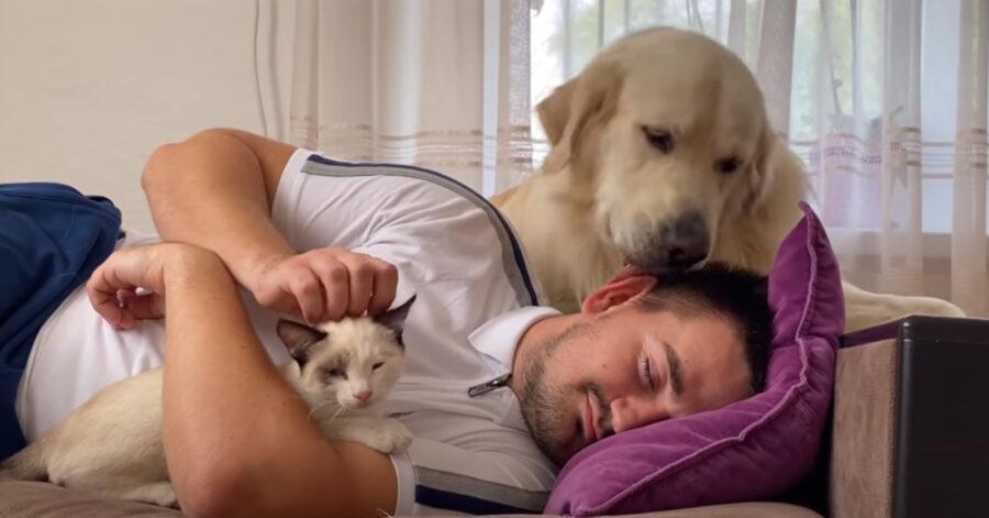 Golden retriever con il padrone e un gattino