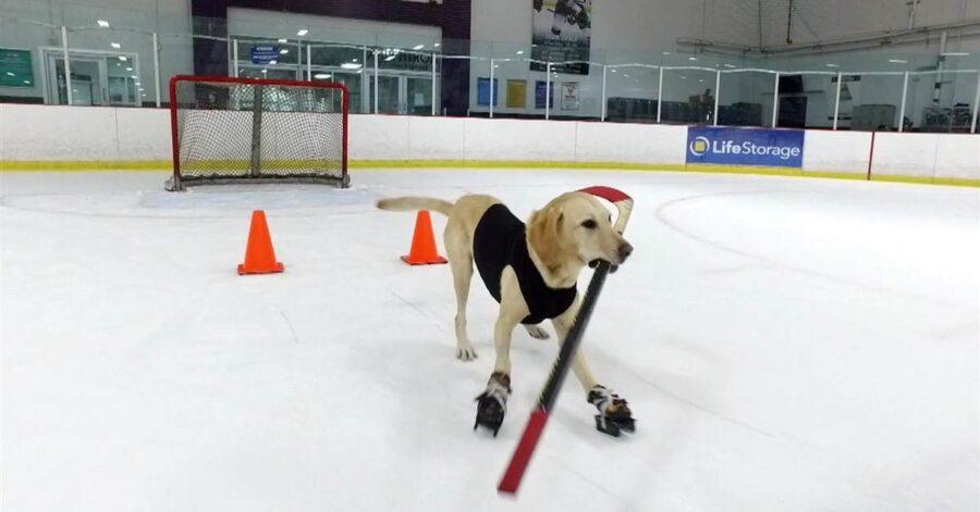 Benny sulla pista di ghiaccio con pattini