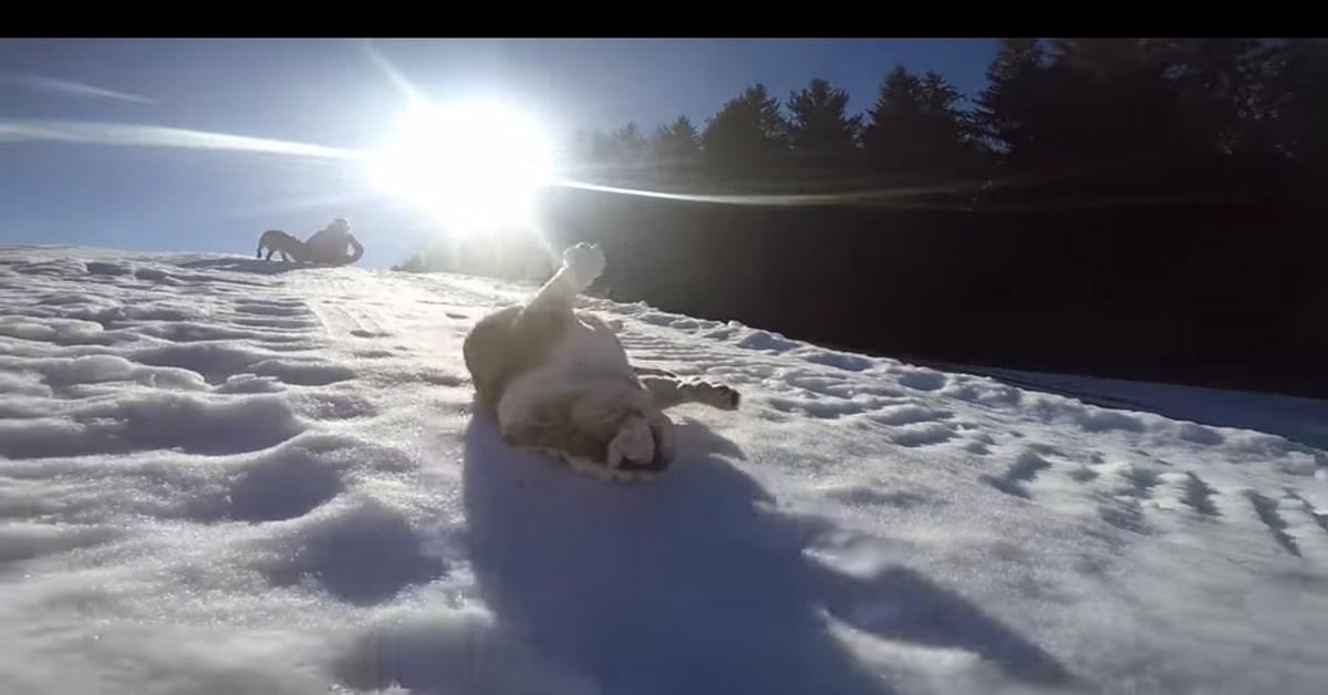 camilla si rotola nella neve felice