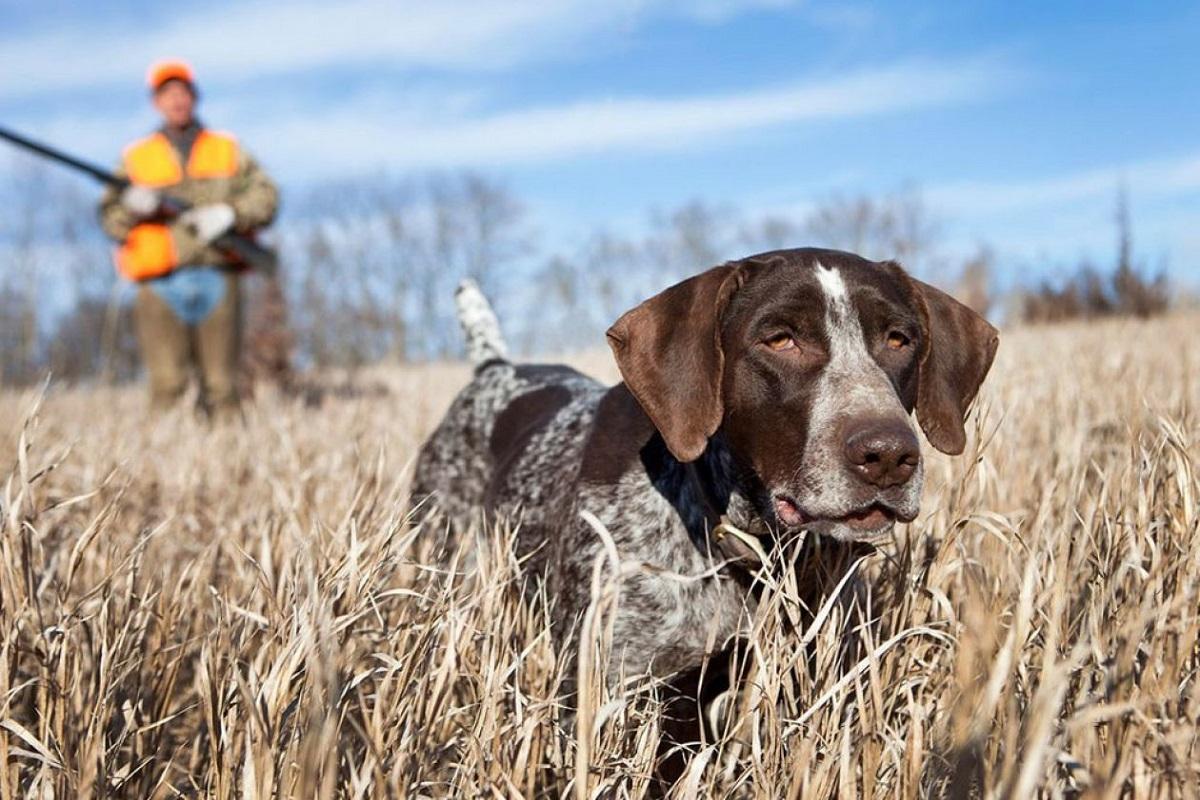 cane durante sessione da caccia