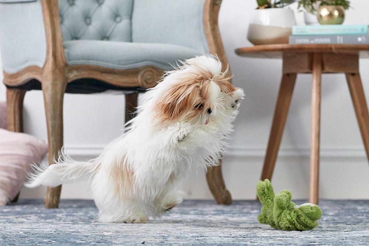 cucciolo di cane corre per tutta casa