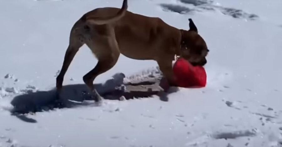Cucciolo di cane nella neve
