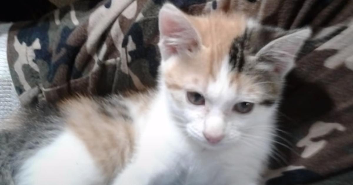 Hazel Yorkshire gattino video