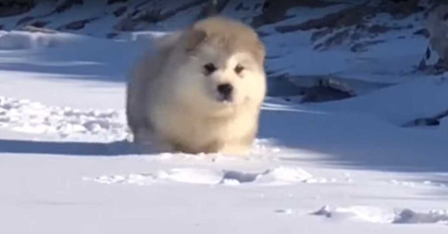 Cucciolo nella neve