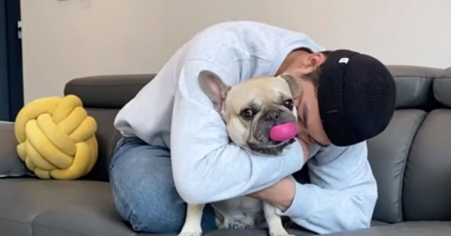 I due Bulldog Francese ricevono un lungo abbraccio dal padrone e reagiscono in modo decisamente diverso (video)