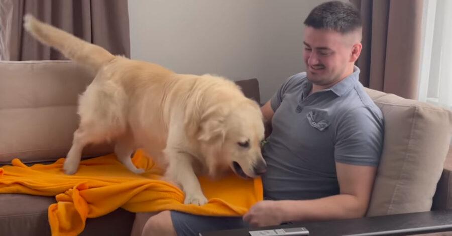 Golden Retriever con il proprietario
