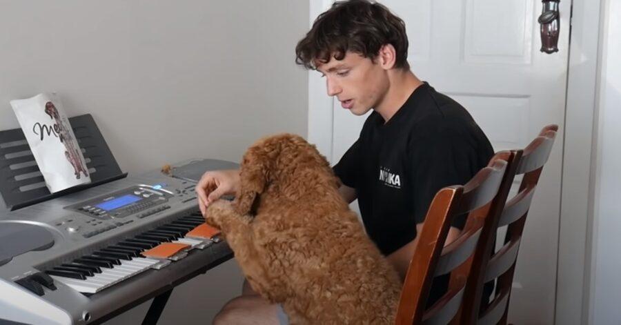 Max Labradoodle piano video