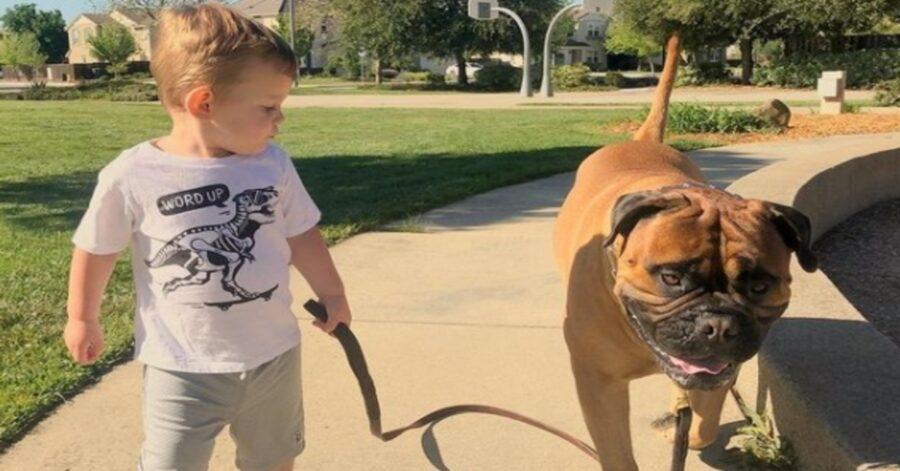 Il bambino piange e il Bullmastiff Brutus gli porta la sua pallina preferita (VIDEO)