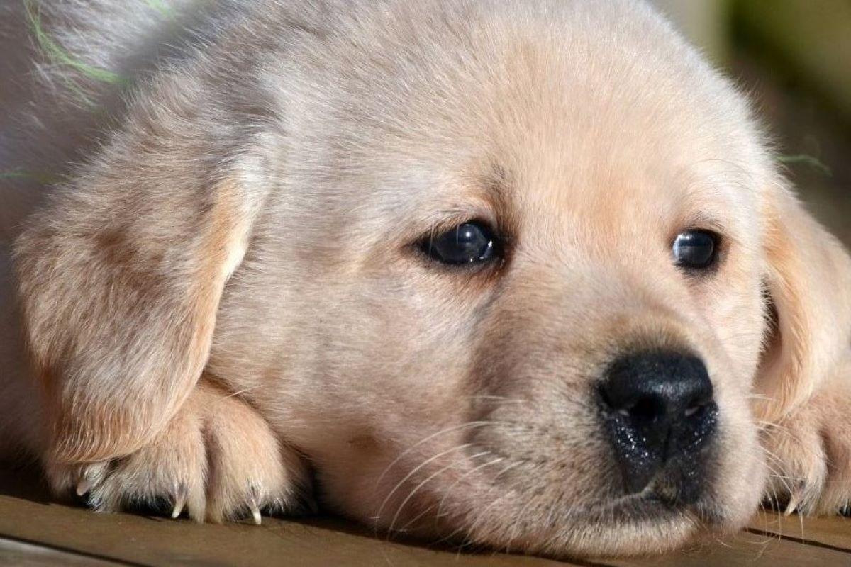 cagnolino stressato