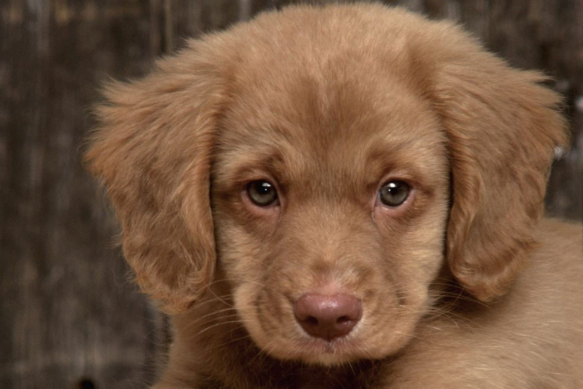 il cucciolo di cane sembra gobbo