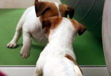 Cucciolo allo specchio