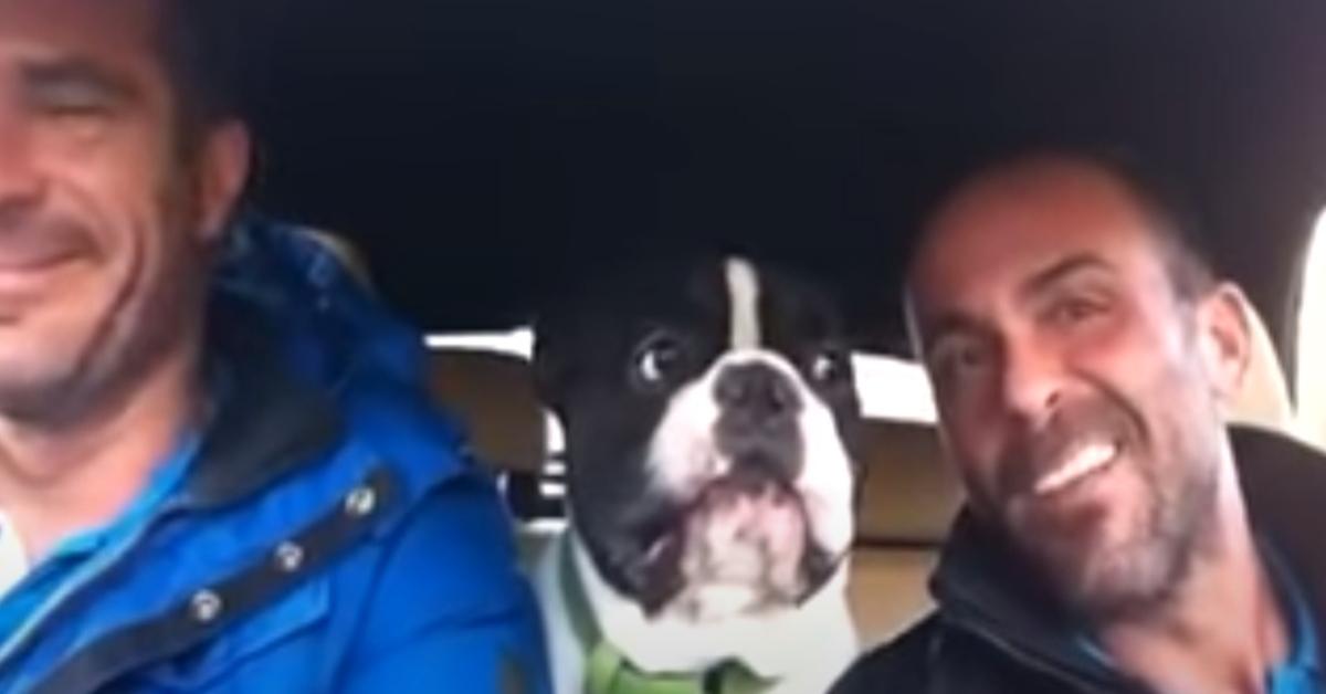 Junior, il Bulldog che strega il web grazie alle sue doti canore (VIDEO)