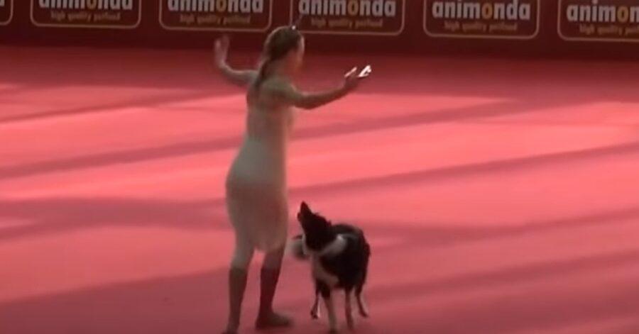 L'incredibile esibizione di danza della Border Collie Lizzy (VIDEO)